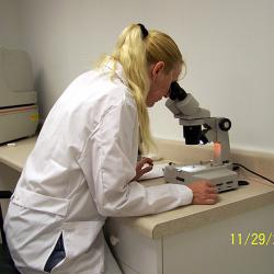 Microscope Inspection